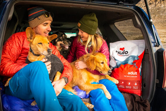 Man and woman sitting in back of vehicle with three dogs and dog food